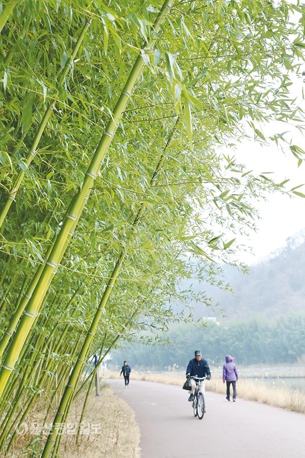▲태화강 십리대숲길은 태화강변을 따라 자연환경을 그대로 살린 대규모 자연공원이다.